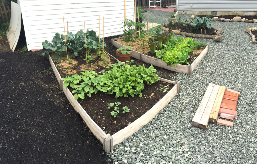 7 Reasons To Start A Backyard Garden